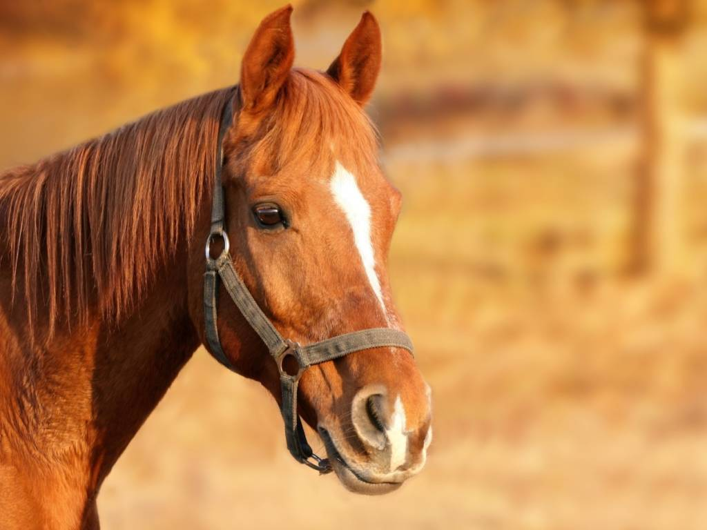 Red-Horse-1024x768